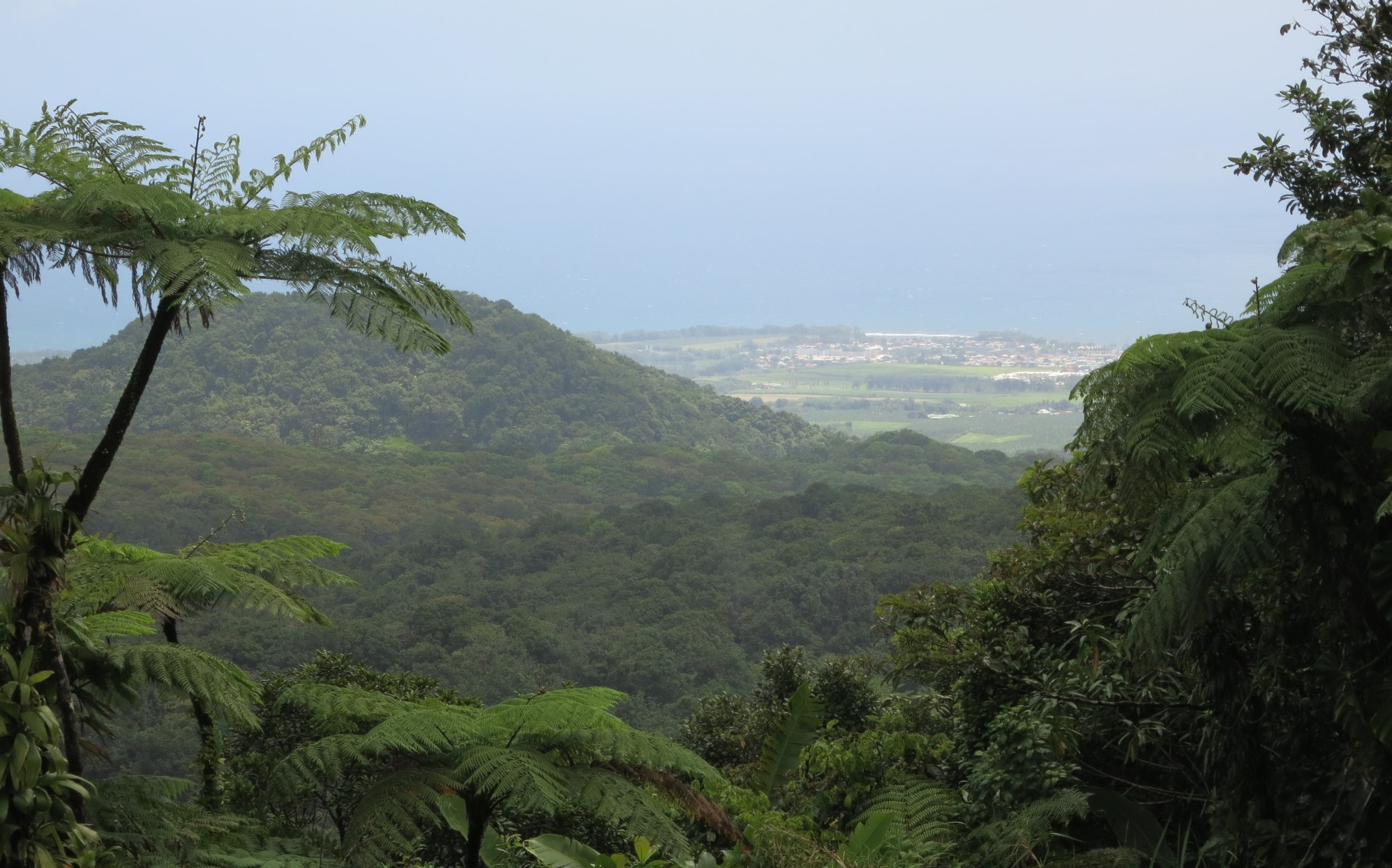 the view from the Carbet Waterfall #2 entrance
