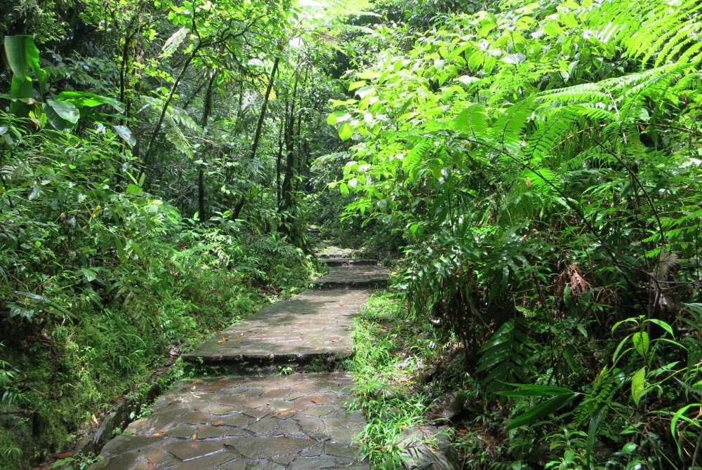 a piece of the path to the waterfall