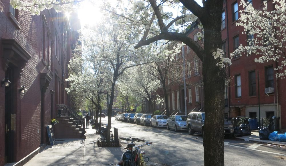 a view of a residential street near the Jane Hotel, showing blooming early spring trees