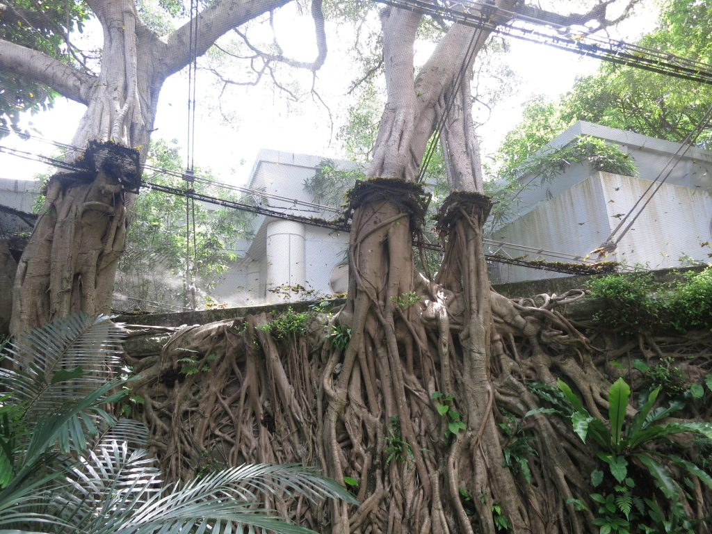 trees growing through the mesh shell of the aviary in Hong Kong Park