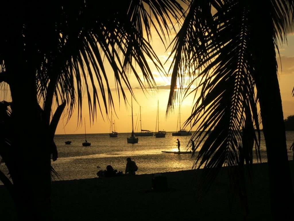 sunset vew framed by palm trees. Two paddleboarders are silhouetted agains the sunset, as are a number of moored sailboats.