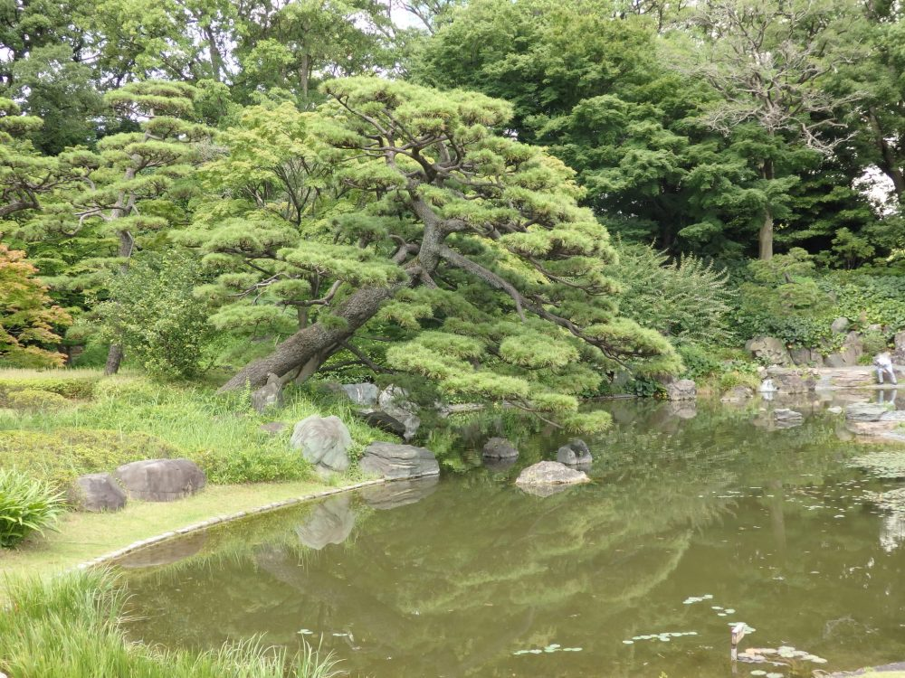 a pond with trees overhanging in the Imperial Palace East Garden, in Tokyo