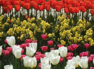 Visiting Dutch Gardens
