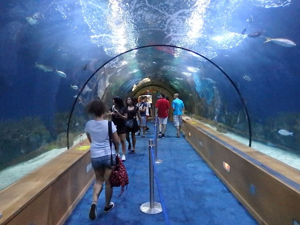 A long straight tunnel with round semi-circular glass and water on both sides and above. A few fish are visible and a number of people are walking down the tunnel or have stopped to look at the fish.