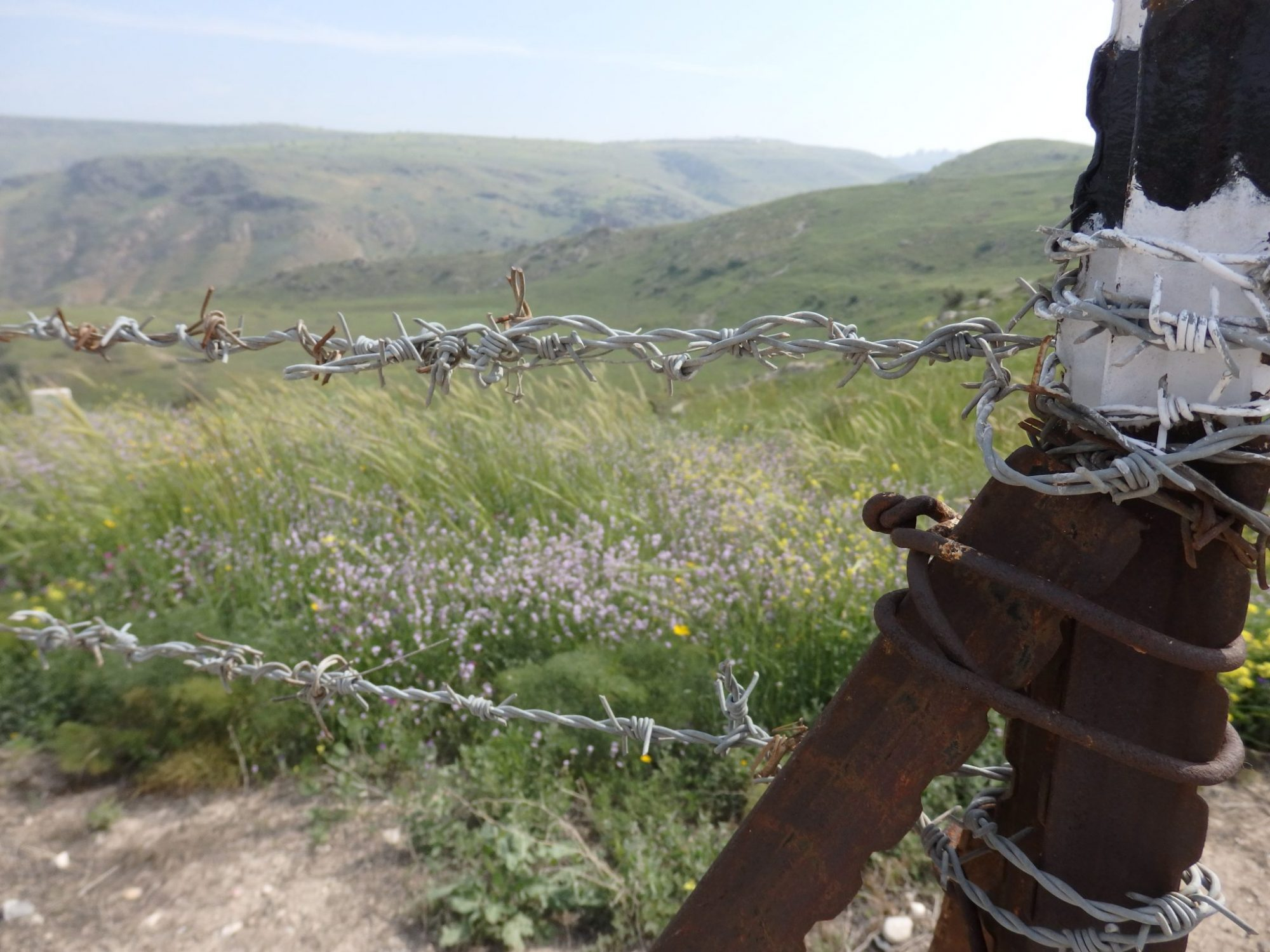 Barbed wire, wildflowers and big views on the way up to Susita National Park, Israel.