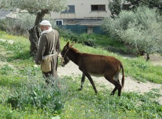 Biblical Nazareth: my observations