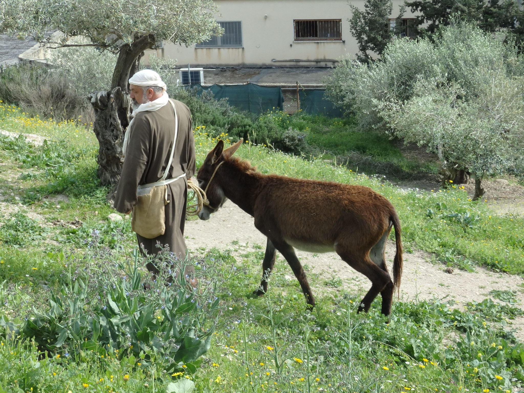 A man leads a donkey in Nazareth Village: Biblical Nazareth