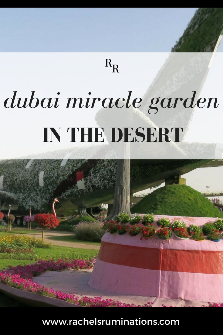 This became a theme at Dubai Miracle Garden: juxtaposition of completely unrelated elements, often involving a bird of some sort. #DubaiMiracleGarden #Dubai #UAE #absurdity #c2cgroup via @rachelsruminations