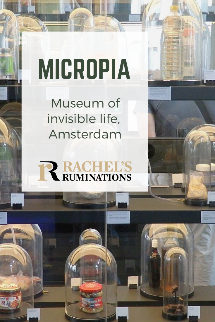 Micropia Museum is remarkably successful, considering that it's all about creatures that are invisible to the naked eye! Not for those with a weak stomach! #amsterdam #micropia #artiszoo via @rachelsruminations