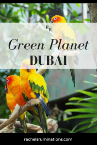 Pinnable image Text: Green Planet Dubai Image: three mostly yellowish orange parrots perched on a branch.