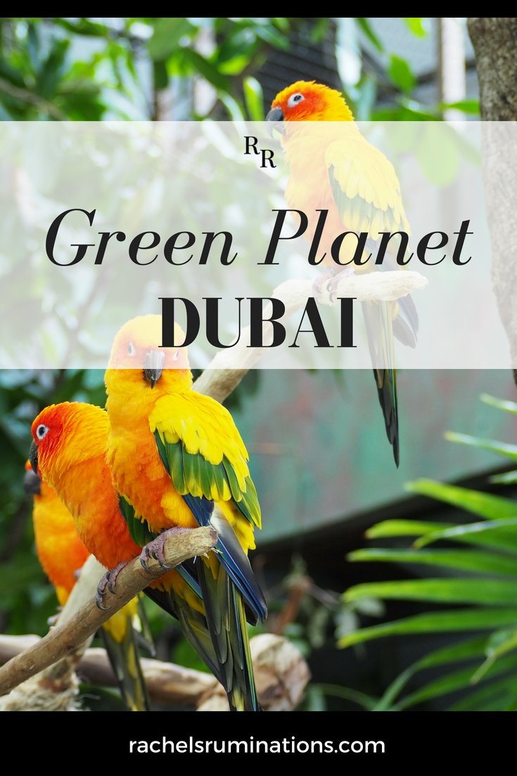 "The Green Planet Dubai is an indoor tropical rainforest, the world's ""largest indoor man-made and life-sustaining tree,"" with over 3000 species inside. #thegreenplanetdubai #greenplanet #dubai #uae #visitdubai #review via @rachelsruminations"