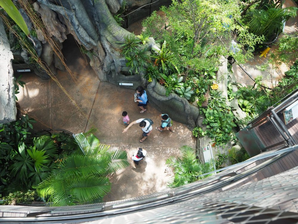 Looking down from about level three. You can see part of the base of the big central tree at the top right of this picture.