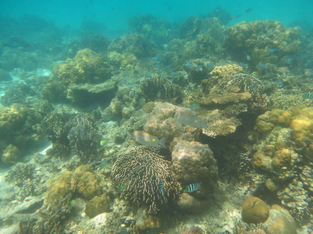 A general view of one of the reefs at Lankayan Island Dive Resort. Photo courtesy of Albert Smith.