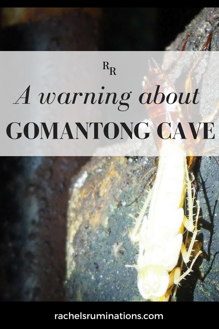 Bat guano (stinky!), cockroaches and other grossness await you at Gomantong Cave in Borneo, a stop on Malaysia's adventure tourism circuit. You've been warned! guano | gomantong | borneo | sabah | malaysia | cave | cockroaches via @rachelsruminations