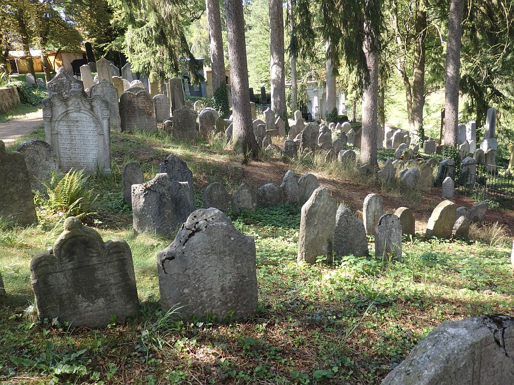 The gravestones are not in great shape, and there is low green weedy-looking ground cover between them. Behind are a number of tall trees growing among the gravestones. A larger stone is visible in the half-distance that has Hebrew lettering and ornate carvings around the lettering. Jewish cemetery in Trebic, Czech Republic.