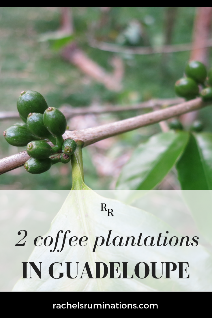 First of all, a confession: I don't drink coffee. Nevertheless, I visited two different coffee plantations in Guadeloupe. #guadeloupe #coffee #coffeeplantation #caribbean #c2cgroup via @rachelsruminations