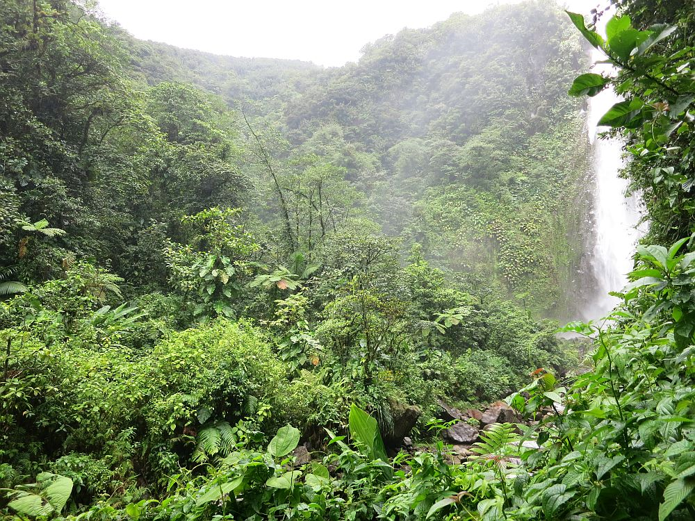 Carbet Waterfall #2 in its incredibly lush rainforest setting. The waterfall itself is on the edge of the photo, while the rest of the frame is just greenery and hills covered in greenery beyond the waterfall.