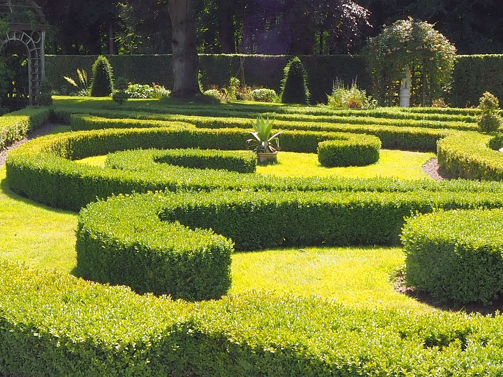 Carefully trimmed, low bushes in neatly curved shapes. Very green, with green grass on the ground between the curves.
