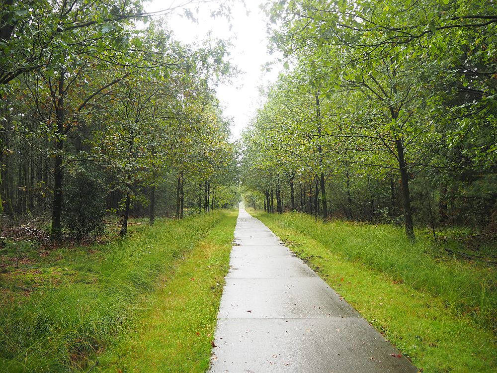 A path stretches ahead to the horizon with green woods on both sides.