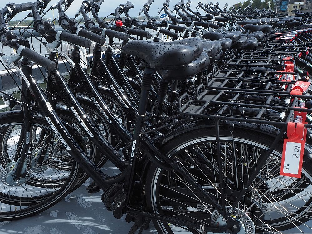 A row of black bikes, lined up very close to each other.