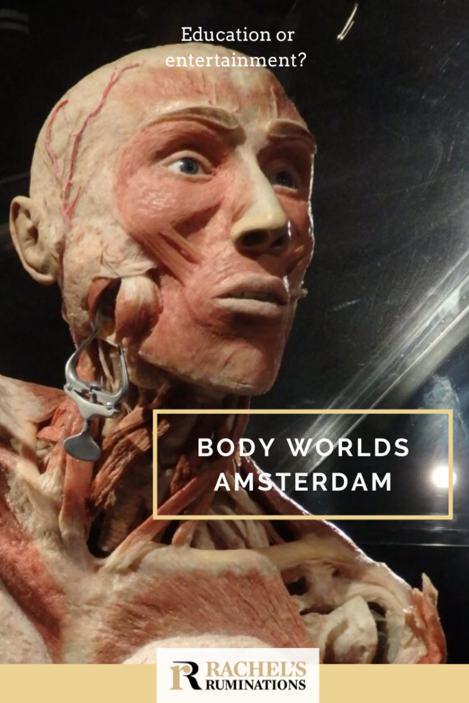 Pinnable image Text at the top: Education or entertainment? Below: Body Worlds Amsterdam (and the Rachel's Ruminations log) Image, close-up of a plastinate man's head. A metal clip attached to his cheek holds a cut in his cheek open to allow seeing inside.