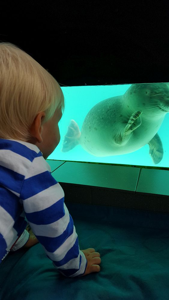 A small blond boy, with his back to the camera, looks into a seal tank, where a seal appears to smile and wave its flipper.