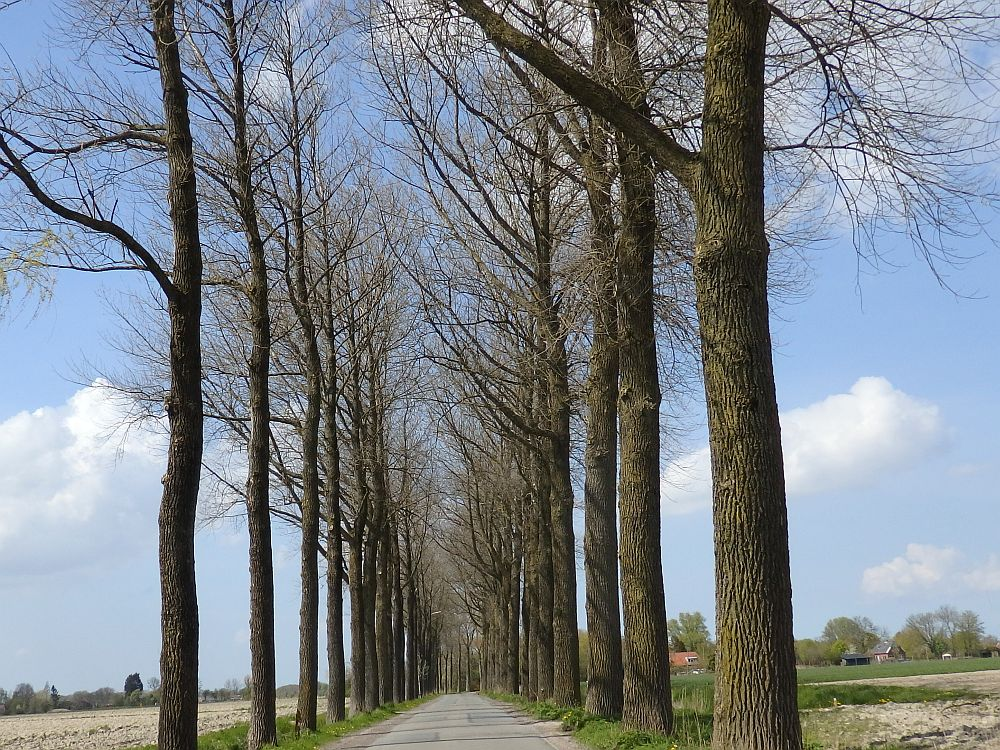 a road going straight ahead into the distance, a row of trees without leaves lining either side.