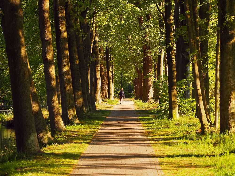 A tree-lined path: tall trees in a neat line on the left, someone younger, less neat trees on the right. The path is red-brick and dappled with shade from the trees. A person in the distance walks toward the camper.