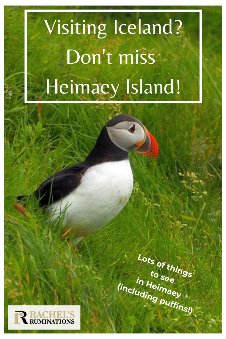 Things to do in #Heimaey island, off the southern coast of #Iceland: a small place with dramatic scenery and a dramatic history to match. #vestmannaeyjar #VisitIceland via @rachelsruminations