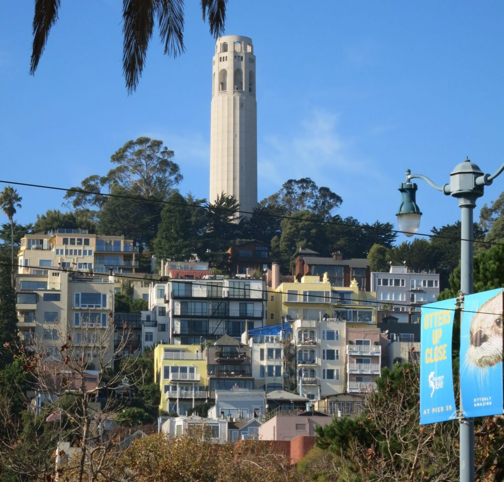 Coit tower at the top of a hill above a jumble of small apartment buildings. Coit Tower is cylindrical and made of white concrete, a wall around the top. At its base is a clump of trees.