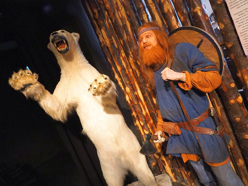 On the left, a polar bear stands on its hind legs, mouth open to show teeth, front paws looking threatening. On the right, a lifelike wax figure of a Viking, hoding an axe in one hand and holding a shield onto his back with the other. He has long red hair and a long red beard. He wears a blue long tunic. He and the bear seem to be looking in the same direction.