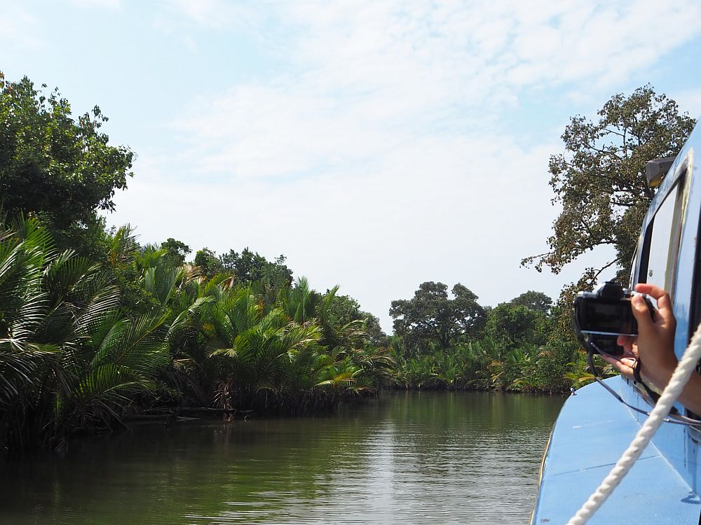 Looking out a window of the boat. A bit of the blue boat is visible at the right side of the photo, and two people extend hands out the window, both holding cameras. The view is dark water ahead, and the riverbank on the left crowded with mangroves and palms.