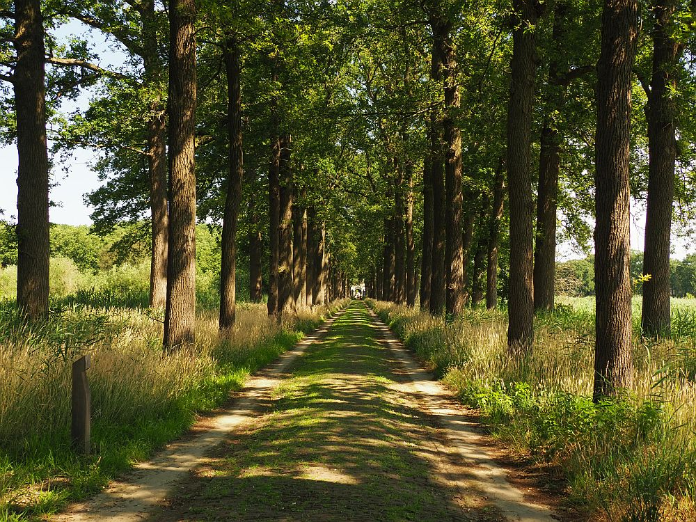 The dirt road is absolutely straight into the distance, too far to make out the castle at the end of it. Trees line the road, casting it in shade: two parallel rows on each side.